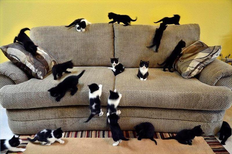 чем вывести кошачью мочу с дивана
