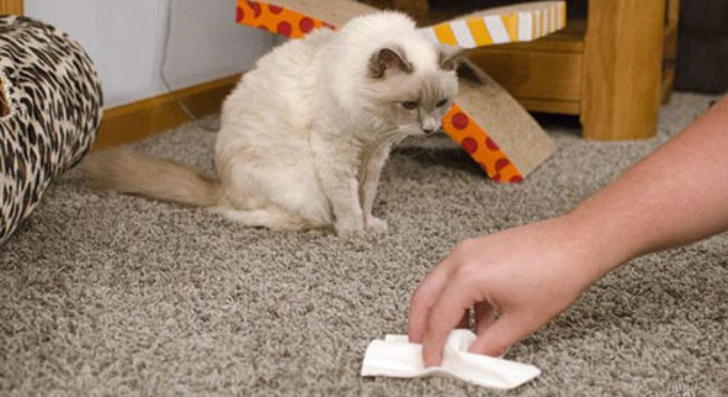 Как избавиться от кошачьей мочи с мягкой мебели