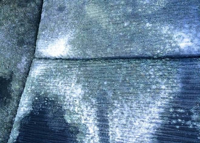 Как убрать плесень с одежды? Избавляемся от плесени в домашних условиях.